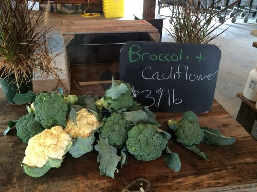 The Farm at Miller's Crossing - organic broccoli and cauliflower - Hudson Valley organic farming